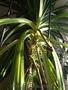 Пальмы от 1м до 2, 8м