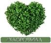 Хлорофилл жидкий Chlorophyll Liquid NSP