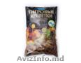 Морепродукты: филе кальмара,  креветки королевские тигровые. Produse de mare File