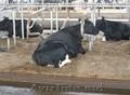 Несменяемая подстилка Нетто Пласт для животных, пробиотики опт и розница