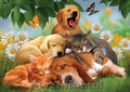 Домашняя гостиница для животных!!!