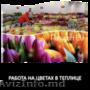 Германия. Работа на цветах в теплице